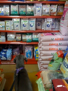 Cinder browses at the petstore