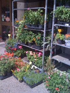 Barbara's flower shop