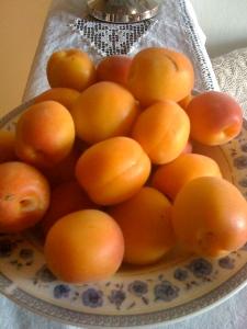 Unbelievable Apricots - Albiccoca