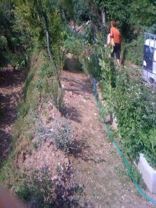 Exploring Carla's garden