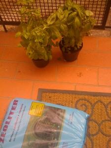 Ready...set...Plant