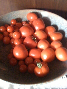 Birthday tomatoes from Carla's garden