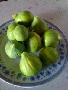 Figs from Marinella's trees