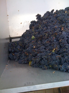 the grapes are placed here and then are slowly sucked into the machine