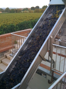 The grapes take a ride into the separator