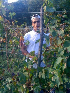Mohammad teaches me which grapes to discard
