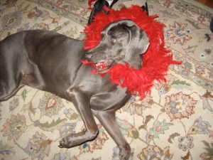 Cinder shows off her sexy side with feather boa...