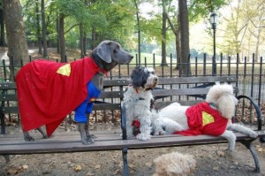 Super Friends!